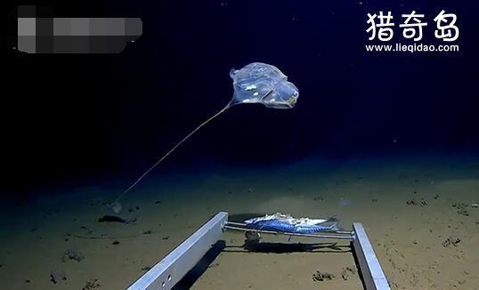 印度洋发现怪物 视频 印度洋发现怪物什么情况 印度洋怪物是怎样的有危害吗