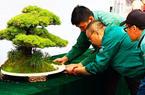 蘇州·福州盆景聯展30日開幕 兩地百余盆景將亮相