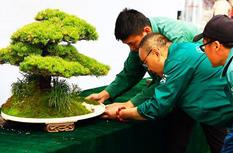 苏州·福州盆景联展30日开幕 两地百余盆景将亮相