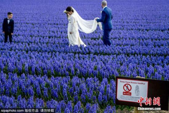 每年游客太多不堪重负?荷兰拟收税控制客流