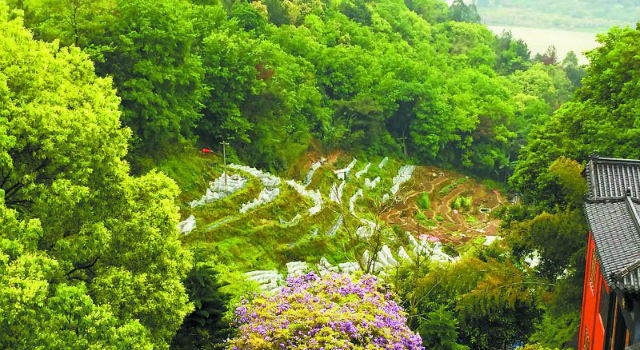 福安天马山公园内开发草莓采摘园 住建部门表示:将进行引导种植
