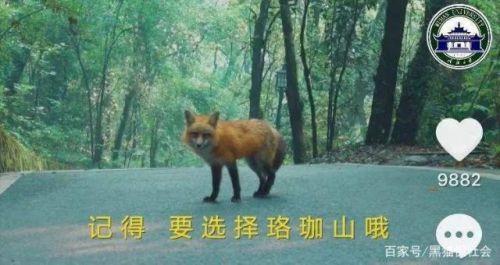 武大招生用小狐狸代言怎么回事?武大招生为什么用小狐狸代言