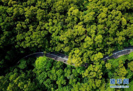 福州:逛城市綠道 享綠色生活