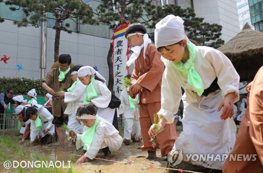 韩国儿童学插秧怎么回事 韩国儿童为什么要学插秧?