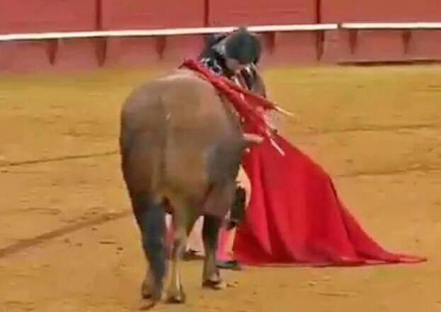 西班牙斗牛士杀公牛前擦干血泪 被批残忍和病态