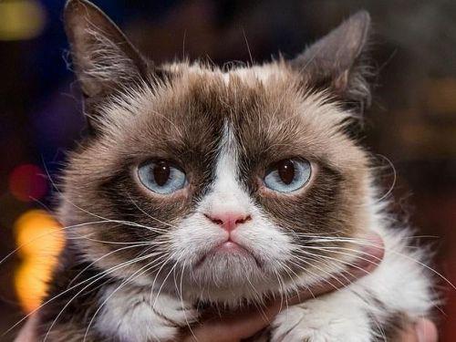 内幕包不爽猫返世怎么归事?内幕包不爽猫返世标因它是怎么走红的