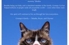 表情包不爽猫去世怎么回事 表情包不爽猫走红过程分享