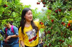 漳州开发区杨梅林迎来采摘季 游客采摘乐