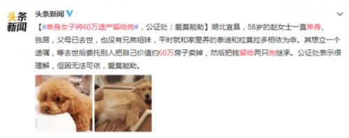 女子将遗产留给狗事件始末引热议 女子将遗产可以赠给自己的狗吗?