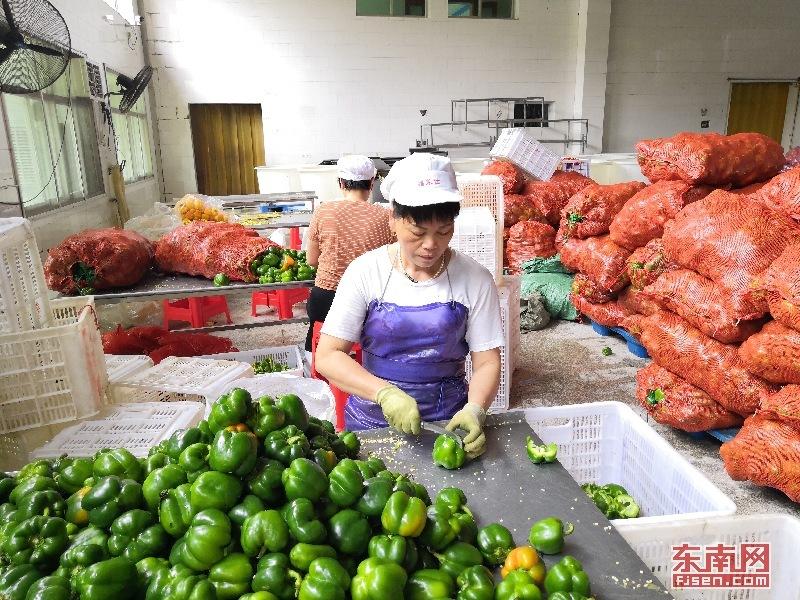 因地制宜抓大工業 漳州南靖龍山鎮打造食品工業強鎮