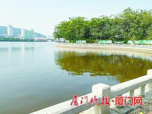 廈門筼筜湖變成褐色和黃綠色 怎么回事?