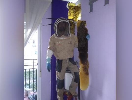 惊呆了!8万只蜜蜂住墙内几个月 每天听着嗡嗡嗡噪音