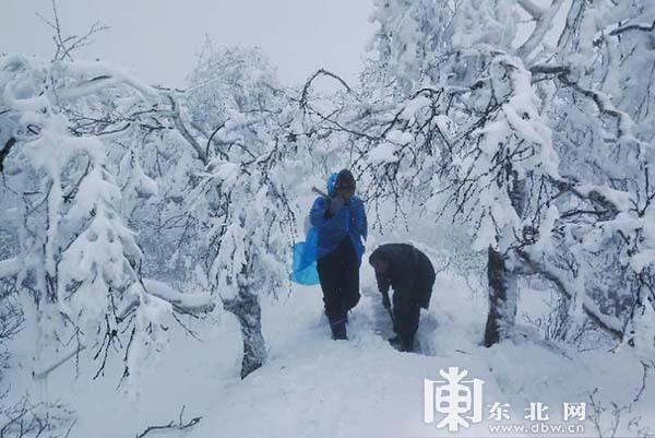 """""""雪一直下"""" 黑龙江凤凰山景区夏季连续降雪已达半米深"""