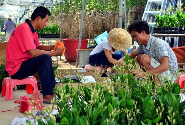 国度林草局:加快培养林业龙头企业和家当集群