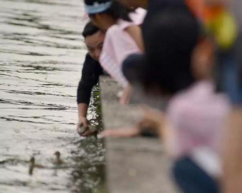 西湖小鴛鴦被抓傷現場圖曝光 西湖小鴛鴦為什么會被抓傷事件始末