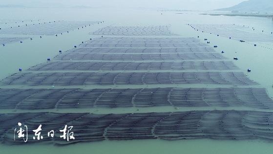 宁德蕉城区:纵深推进藻类养殖改革