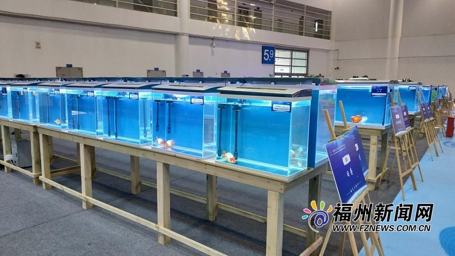福州举办第二届世界金鱼大赛 高端金鱼集中亮相