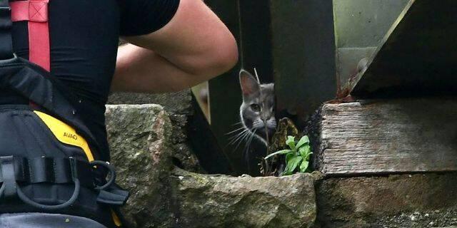 英国消防员花近6000英镑救猫 猫却自己回家了