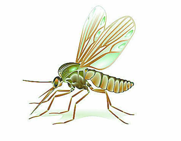 廈門5月雨天多近期氣溫高 蚊子進入繁殖活躍期
