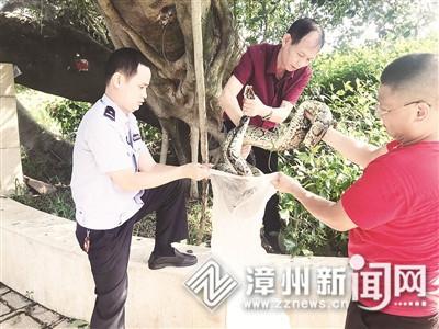 南湖公園驚現一大蟒蛇 擒獲后移交動物園安置