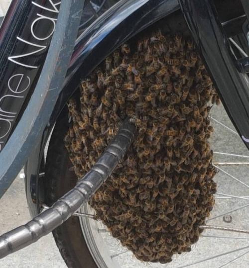 蜜蜂聚集在城市样子说道的自行车锁上(图源:推特)