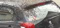 蜂群爬滿汽車頂蓋怎么回事 蜜蜂衍生季節尋找新的棲息地