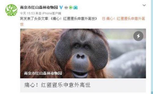 猩猩樂申意外離世怎么回事?猩猩樂申意外離世原因是什么