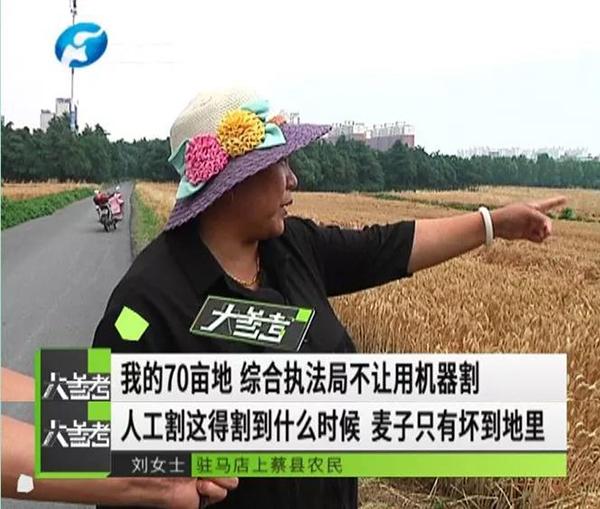 農婦手割70畝小麥是真的嗎?河南上蔡縣為什么要求農婦手割小麥