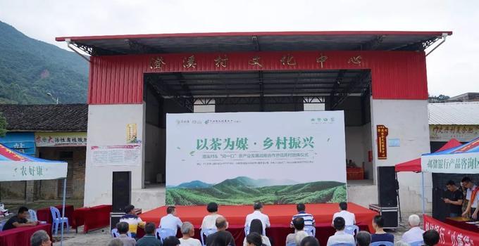 以茶為媒,鄉村振興,漳州企業助力革命老區村茶產業發展