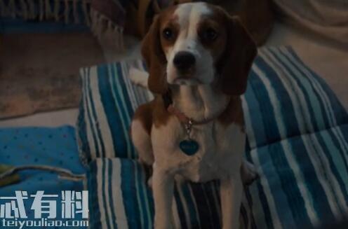 一条狗的使命2有彩蛋吗?一条狗的使命2什么时候上映剧情介绍