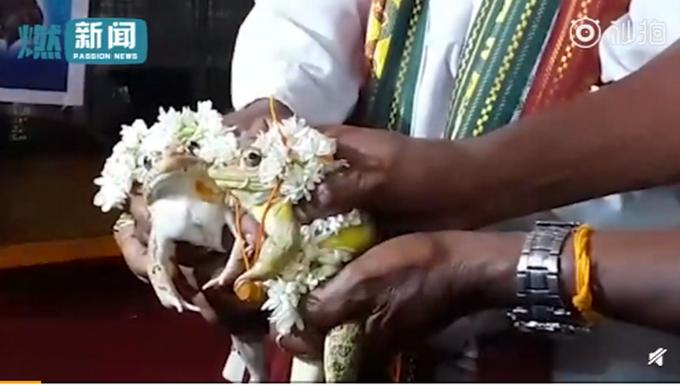 为求雨给两只青蛙办婚礼详细情况 给青蛙接着噗办婚礼真的有用么?