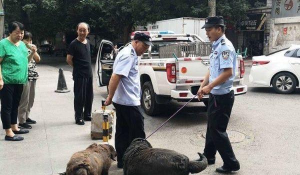 西安牵狗绳超2米将罚款怎么回事?西安市限制养犬条例具体规定内容