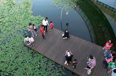 福州金牛山福道:綠道光譜折射幸福圖景