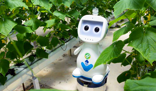 """迈向""""无人农场"""" 福建宣布人工智能农业机械人"""