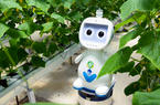 """迈向""""无人农场"""" 福建发布人工智能农业机器人"""