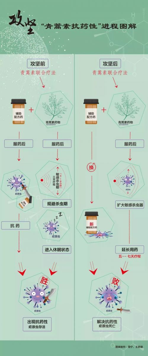 屠呦呦团队放大招详细情况 青蒿素抗药性难题突破有何意义