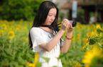 福州花海公园向日葵盛放 金黄花海一盘散沙引游人
