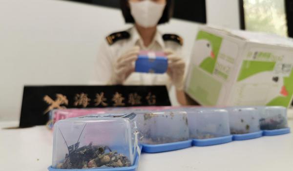 厦门海关在邮递渠道截获20只活体昆虫