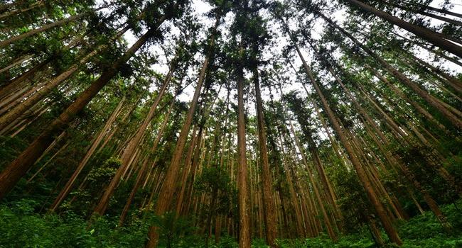 """南平延平:農業、生態和旅游結合 百年""""綠色金庫""""嬗變"""