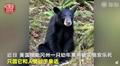 黑熊与人亲安乐死怎么回事?黑熊与人过亲为什么要被安乐死引热议