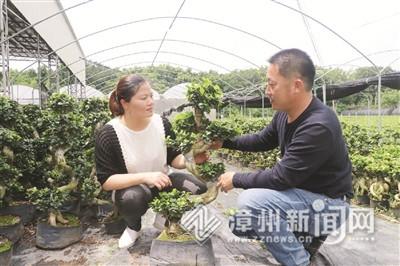 """漳浦沙西榕树:""""一场虚惊""""带来""""一次变革"""""""