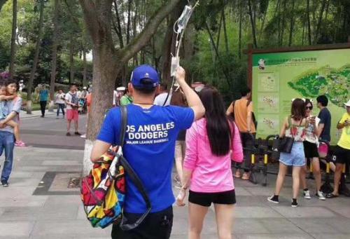 打吊瓶看熊猫免票怎么回事?打吊瓶看熊猫为什么免票引网友热议