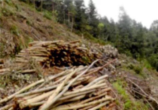 三明尤溪一八旬老人雇人砍伐自留山樹木58株,結果……