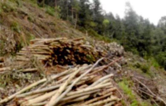 三明尤溪一八旬老人雇人砍伐自留山树木58株,结果……