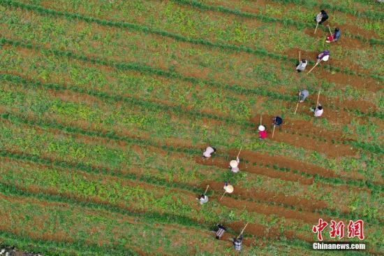 农业农村部:深度贫困地区脱贫攻坚成效在显现