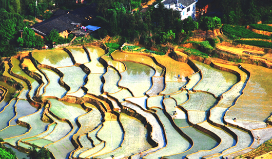 尤溪联合梯田:孕育水稻,孕育致富梦想