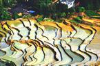 尤溪聯合梯田:孕育水稻,孕育致富夢想
