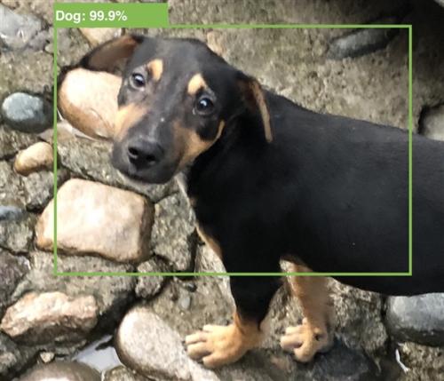 iOS 13被曝加入AI拍照功能,能分辨貓狗等小動物