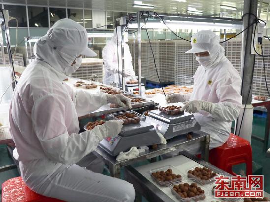 南靖臺資企業森泉食品:抓發展 促食品產業升級