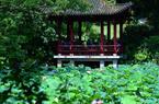 福建福州:西湖·左海公园 夏日荷塘美如画
